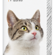 Multi-Vit Cat - 50ml - Dutch/French/English