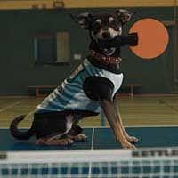 Les Caninlympiades de Beaphar