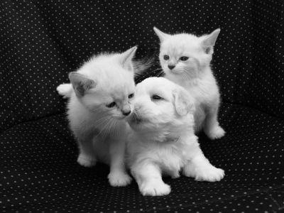 Accueillir un chiot ou un chaton