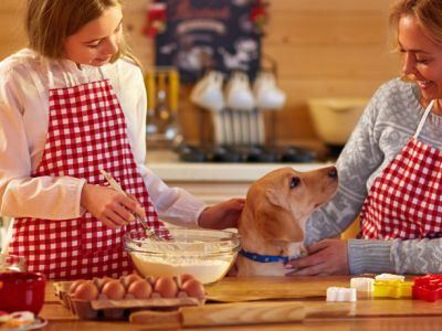 Les dangers du chocolat chez le chien et le chat