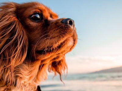 Où partir en vacances avec son chien