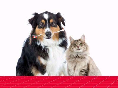 Les problèmes bucco-dentaires de l'animal et nos solutions