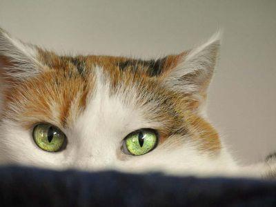 5 signes qui montrent que votre chat est stressé