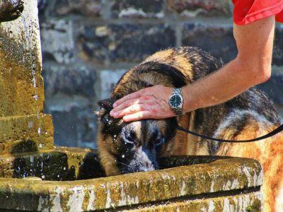 Comment protéger son animal des fortes chaleurs ?