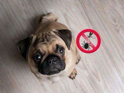 Protégez-vous, vous et votre chien des tiques et des moustiques