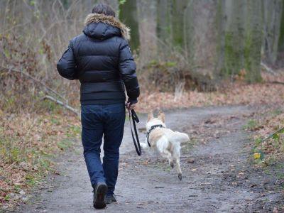Exercices à faire avec votre chien