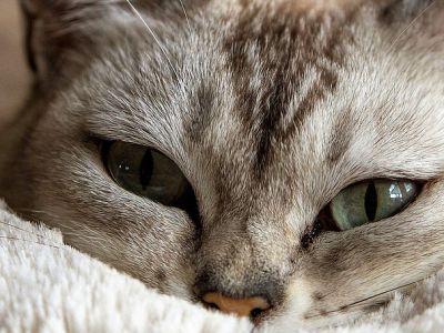 Prendre soin d'un chien ou d'un chat convalescent