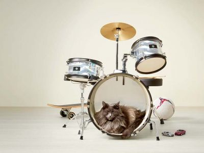 Choisissez le bon produit calmant pour apaiser votre chat