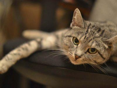 Fêtes de fin d'année sans stress pour vos animaux