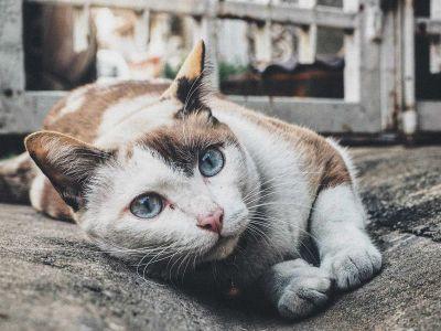 Votre animal est-il stressé ?