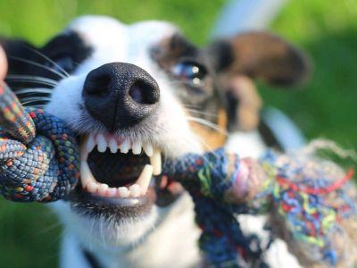 L'importance d'une bonne hygiène bucco-dentaire chez le chien et le chat
