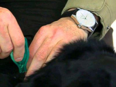 Comment appliquer une pipette antiparasitaire sur mon animal ?