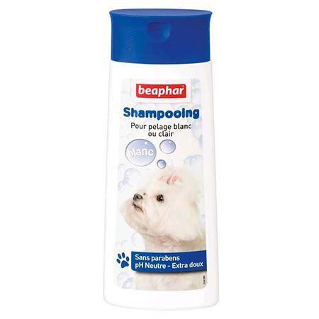 shampooing chien pelage blanc