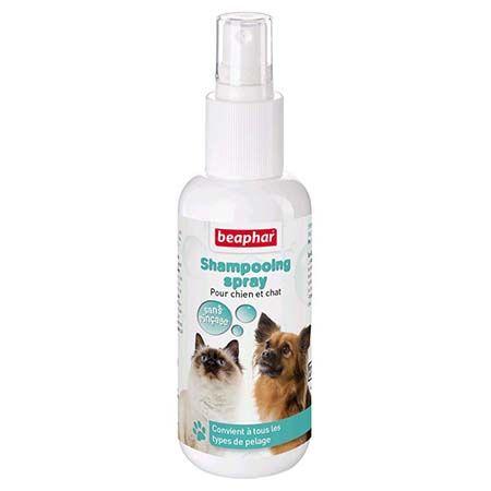 Shampoing sans rinçage chien