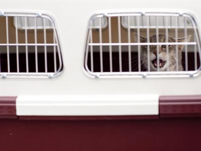 3 Tipps gegen die Angst vor der Katzentransportbox