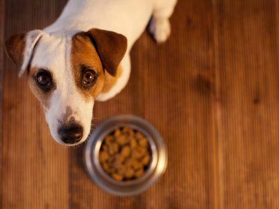 Ernährung für ältere Hunde