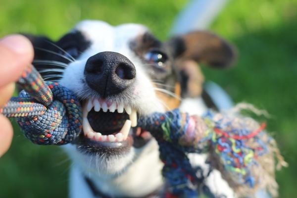 NEU: Zahnpflege Sticks für Hunde