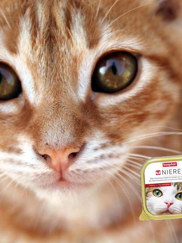 Nierendiäten für Katzen in neuem Design!