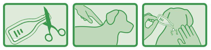 Zecken- und Flohschutz Spot On Anwendung
