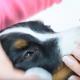 Augenpflege beim Hund (Video)