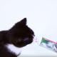 Gesundes für kleine Kätzchen (Video)