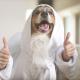 Morgens 10 nach 10 in Hundedeutschland (Video)