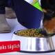 Zahnpflege Croks für Hunde (Video)