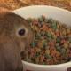 Care+ für Nager und Kleinsäuger (Video)
