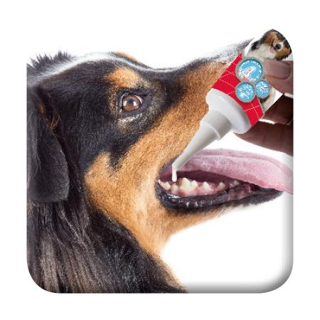 Zahngel - Anwendung