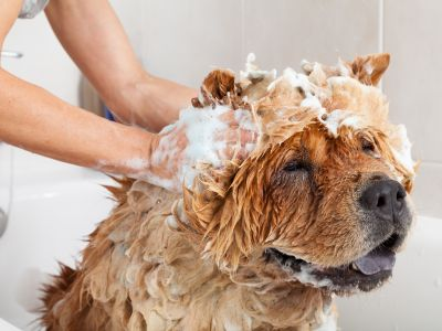 Why choose an environmentally friendly shampoo for your dog?