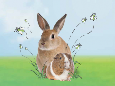 Fly strike in Rabbits & Guinea Pigs - what to look out for