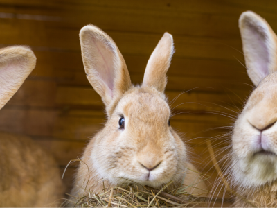 How to set up a rabbit hutch – a guide to housing