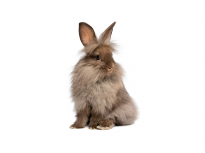 Dental problems in rabbits: causes, signs and solutions