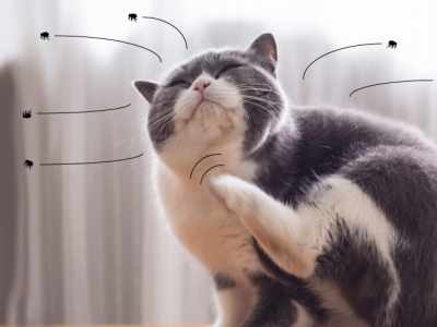 Understanding the flea life cycle and how to kill fleas