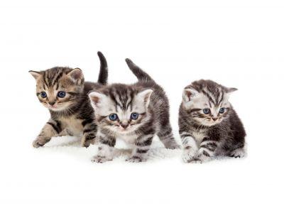 Een nestje kittens op komst: de verzorging na de bevalling