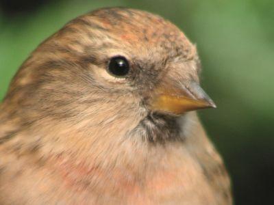 Zelf een traktatie voor tuinvogels maken?