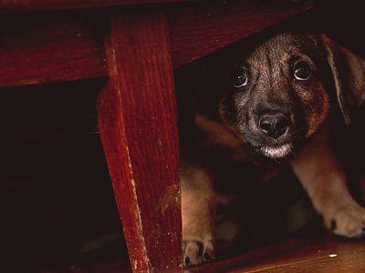 Heeft jouw hond last van stress?