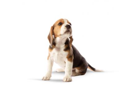 Een nestje pups op komst: checklist & notitiepagina's