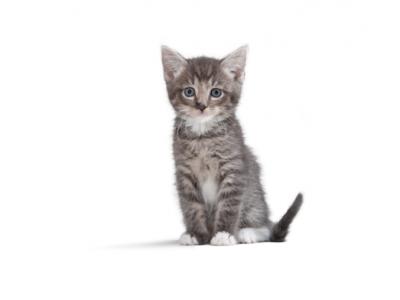 Een nestje kittens op komst: checklist & notitiepagina's