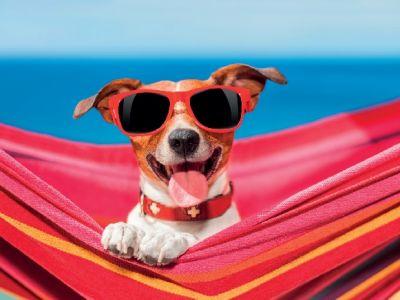 5 musthaves voor een zorgeloze vakantie