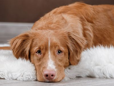 A guide to leaving your dog at home alone