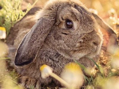 Verzorgingstips voor het oudere konijn