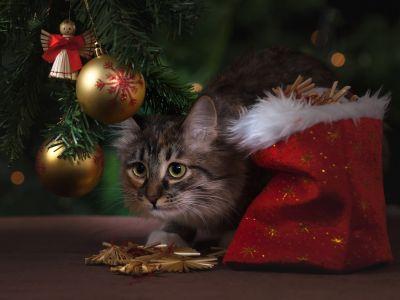 5 tips om je kat uit de kerstboom te houden