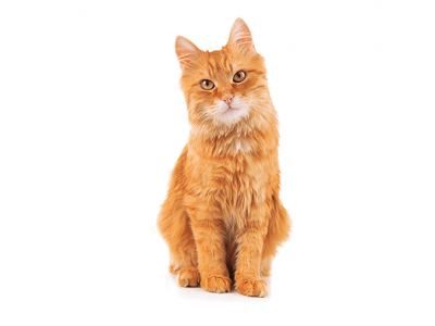5 signs your cat may have fleas