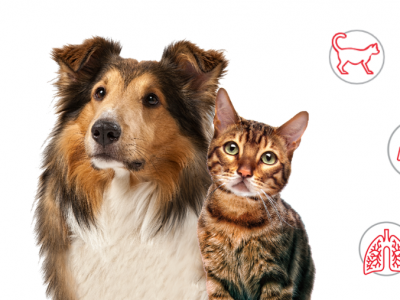 Worms in cats and dogs: Signs and Symptoms
