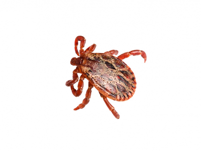 Ticks and Lyme Disease: How to protect your pet
