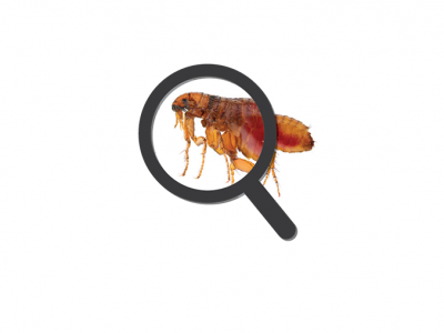 How to check your pet for fleas