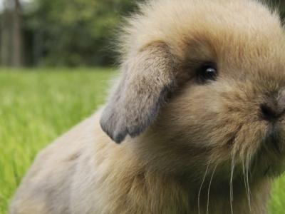 Gebitsproblemen bij konijnen herkennen én voorkomen