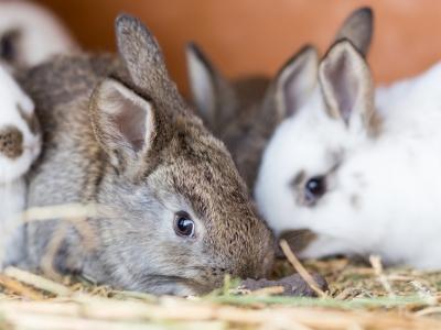 XtraVital: voeding voor konijnen en knaagdieren