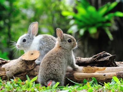 Wintertips voor buitenkonijnen